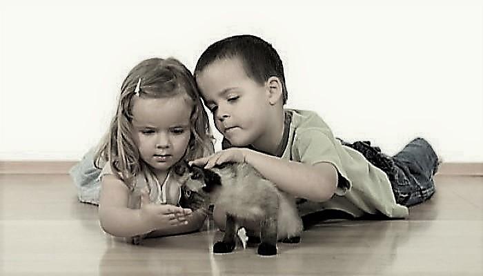 2311-mon-enfant-a-ete-mordu-par-un-animal_2