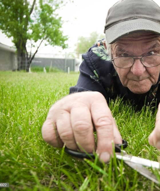 A crazy old man cuts his grass with a pair of scissors.